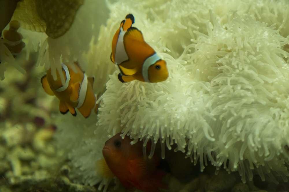 Andaman and Nicobar Island (31)